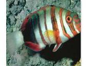 votre avis est-ce poisson d'avril