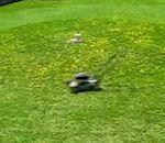 Marre tondre votre pelouse