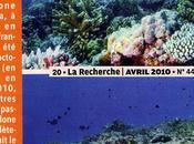 rasé coraux polynésiens