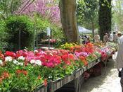 Quelques images marché fleurs 2010 Fourcès