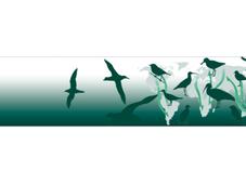 Journée mondiale oiseaux migrateurs