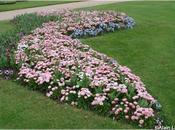 Fleurs Dimanche Thabor Rennes