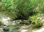 Bent Creek: Little Hickory Loop