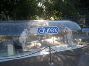 Durex: étudiants poil contre Sida