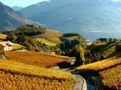 renaissance vignoble suisse terroirs…