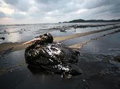L'échelle marée noire Lousiane