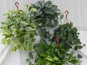 L'effet réel plantes dépolluantes ADEME