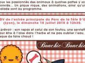 Pique- Nique pour Chiens Lyon