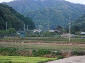 Coree Gyeonggi-Do Quand pousse