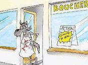 couple loups attaque deux génissons
