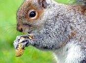 L'écureuil mange (Jack Kerouac)