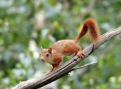 chat l'écureuil (Jack Kerouac)