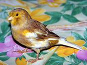 affections pattes chez oiseaux cage (1ère partie)