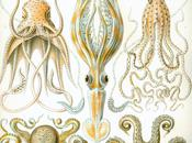 Remarquables Cephalopodes