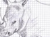 Petit rhinocéros