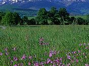 green valley niveau européen Midi-Pyrénées