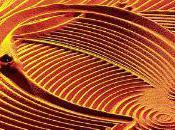 détendre moins minutes avec titre relaxation Mandala Dream Phoebus.
