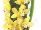 conseils pour bien soigner tige orchidée Cymbidium