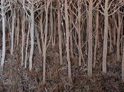 perdre dans forêt imaginaire d'Eva Jospin