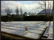 Lapin crétin finistérien sous neige