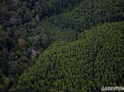 Cancun doit être impasse pour forêt