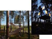 Treehotel expérience unique haut arbres
