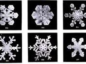 cristaux glace comme fleurs neige