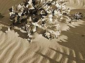 Dans dunes