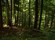 balcon forêt