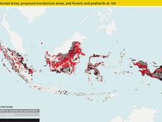 Indonésie projet moratoire déforestation insuffisant