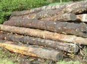 entreprises forestières suspendues pour activités illégales