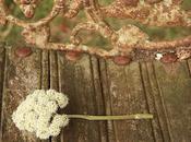 Cueillie puis abandonnée (Abbas Kiarostami)