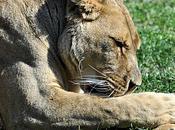 Maya lionne Barben