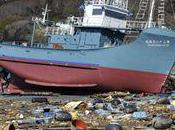 Tsunami figue-mi raisin pour baleines