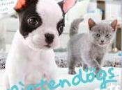 [Test 3DS] Nintendogs Cats, kawaï selon Nintendo