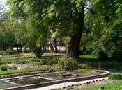 Faune, Fauve Famille jardin Plantes