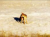D'autres animaux parc Etosha Namibie