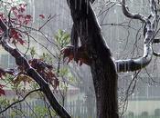 poème thème pluie printemps