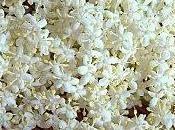 Sirop Fleurs Sureau