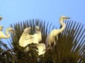 Delta Saloum inscrit patrimoine mondial l'UNESCO