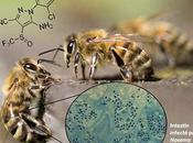 Insecticides surmortalité abeilles