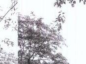 Nouveau clip Timber Timbre