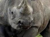 organisations criminelles tuent faune
