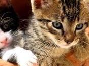 Zoothérapie, thérapie animaux