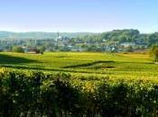 Anjou-Saumur vins (1/4)