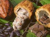 raisons l'embellie dans filière Cacao-Café