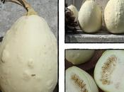 Courge coloquinte?