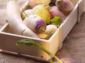 Navets, daikon autres légumes racines