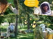 J'ai testé... Déménagement d'insectes volants division d'une ruche