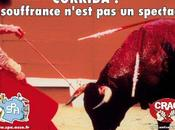 vous devez savoir préparation taureaux avant corridas